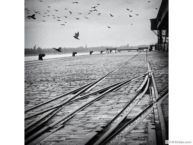 Pigeon Dock