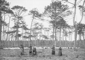 """Félix ARNAUDIN, """"Pins Lilère (chapeaux à la main)"""", 21 janvier 1892, d'après négatif sur verre au gélatino-bromure d'argent. Collection Musée d'Aquitaine, Inv. 66.27.2028."""